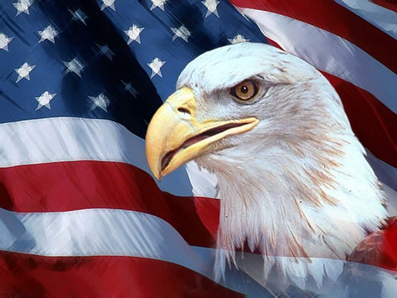 Desktop American Flag Eagle Pictures 800x600 Go Motorcycling